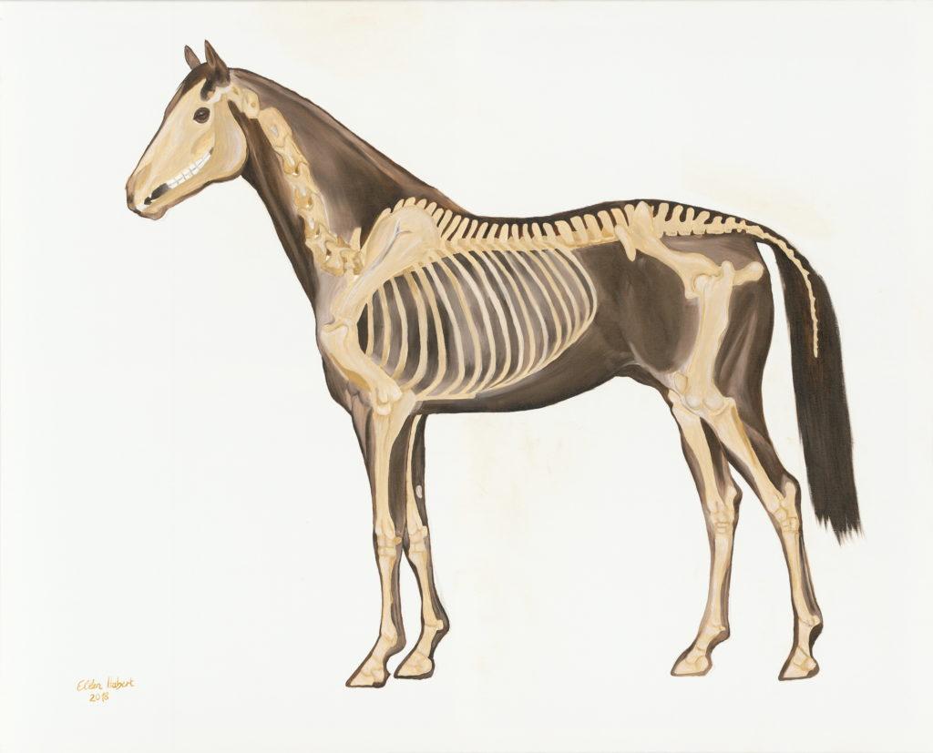 Pferdeknochen